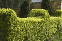 hecken zur gestaltung und bepflanzung im garten ratgeber. Black Bedroom Furniture Sets. Home Design Ideas