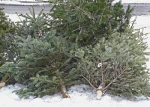 weihnachtsbaum-entsorgen