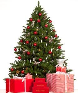 lagerung des weihnachtsbaumes vor heiligabend. Black Bedroom Furniture Sets. Home Design Ideas