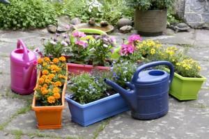 Balkonkästen für den Frühling bepflanzen