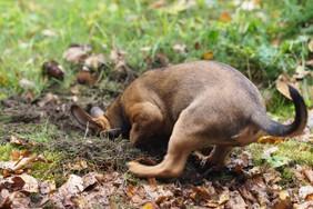 Ein Hund sollte auch im Garten mal buddeln dürfen.