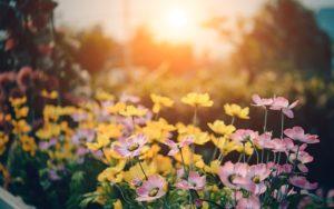 Gartenlage Himmelsrichtungen - Sonnenaufgang im Osten