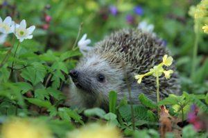 Gartenratgeber - Pflanzen und Tiere im Garten erleben