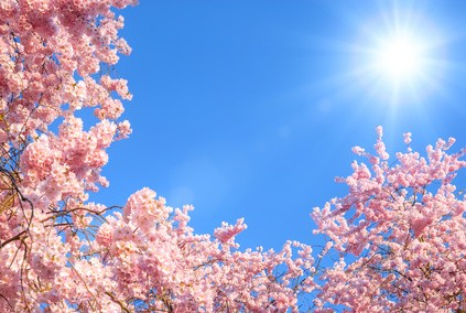 Himmelsrichtung des Gartens - Wie und wann scheint die Sonne im Garten?
