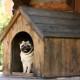 Es gibt vieles, worauf beim Bau einer Hundehütte geachtet werden muss.