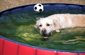 Hundeplanschbecken im Gartem