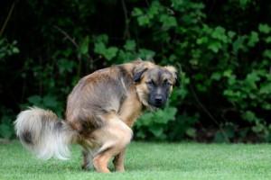 Haufen auf dem Rasen sind keine angenehme Angelegenheit - eine Hundetoilette kann im Garten Abhilfe schaffen.