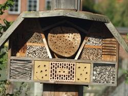 Erklärung, warum manche Insektenhotels nicht von Wildbienen und Co. angenommen werden.