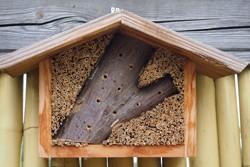 Wie sieht der optimale Standort für ein Insektenhotel aus?