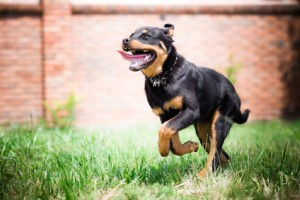 Hundegerechter Und Hundesicherer Garten Wohnen De Magazin