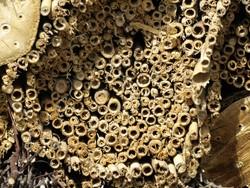 Hohle Stängel als Insektenhotel für Wildbienen.