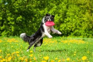 Eine große Rasenfläche zum Spielen und Rennen ist wichtig für den Hund.