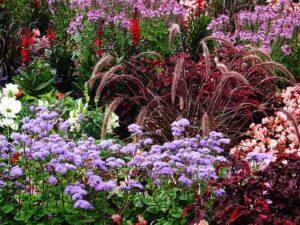 Sturmfesten Garten gestalten: Pflanzen vor Sturm schützen - darauf sollten Sie achten!