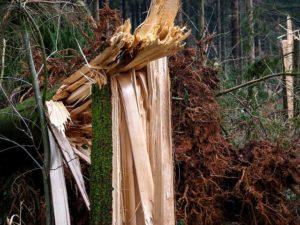 Sturmschäden an Bäumen vorbeugen und Schlimmeres vermeiden!