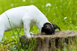 Die meisten Hunde haben Freude an Suchspielen.