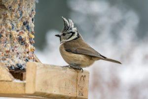 Schutz von Wildtieren im Garten - z.B. Singvögel füttern