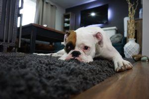 Wohnen mit Tieren - Harmonisch mit Tieren in der Wohnung zusammenleben