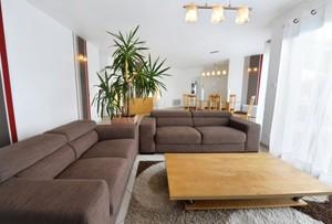 Attraktive Zimmerpflanzen bereichern jeden Wohnraum.